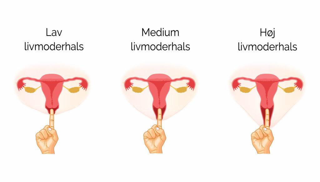 menstruationskop størrelse